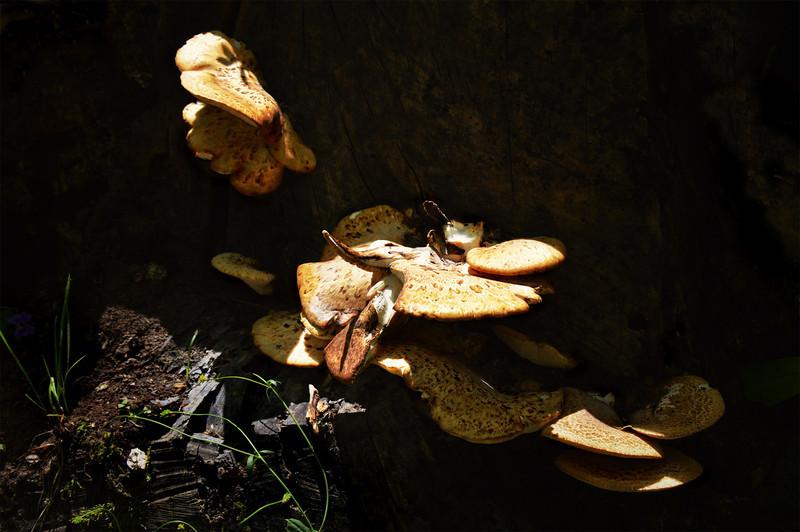 Cincinnati Nature Center-342