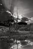 Glenwood Gardens-492bw