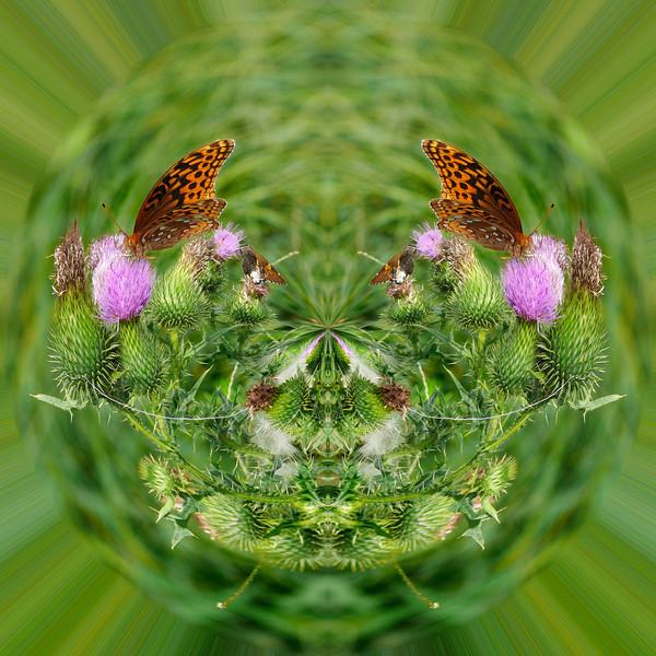 Polarization 130: Fritillary Butterfly