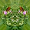Butterfly Polarization 130