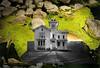 Merge XXVIII: HOUSE IN THE ALGAE