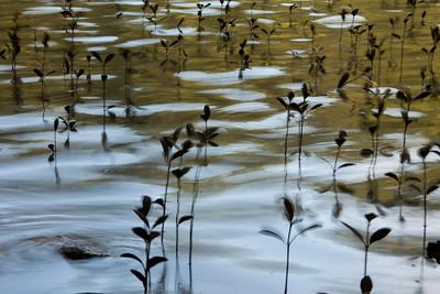 15_Mangroves