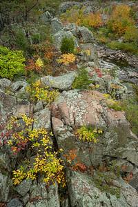 Fall's Dramatic Colors on Bedrock Terrace 3