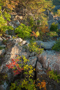 Fall's Dramatic Colors on Bedrock Terrace 6