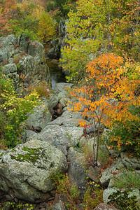 Fall's Dramatic Colors on Bedrock Terrace 5