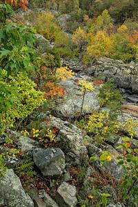 Fall's Dramatic Colors on Bedrock Terrace 2