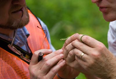 Examining a Young Green Snake at BioBlitz