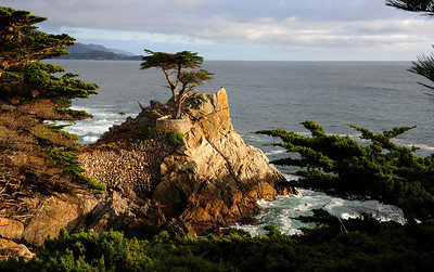 The Lone Cypress, Pebble Beach Ca. This tree has been standing here more than 250 years. It is the Logo of the Pebble Beach Resorts