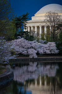Jefferson Memorial and Cherry Blossoms Before Dawn