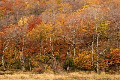 Trees along Profile Lake,