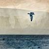 Tufa Bird