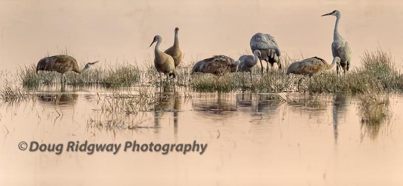 Cranes in Morning Light