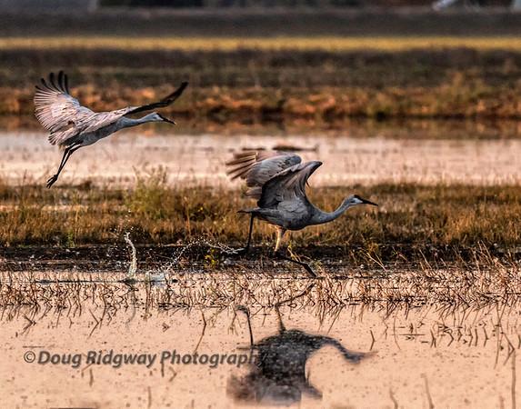 Crane Take-off
