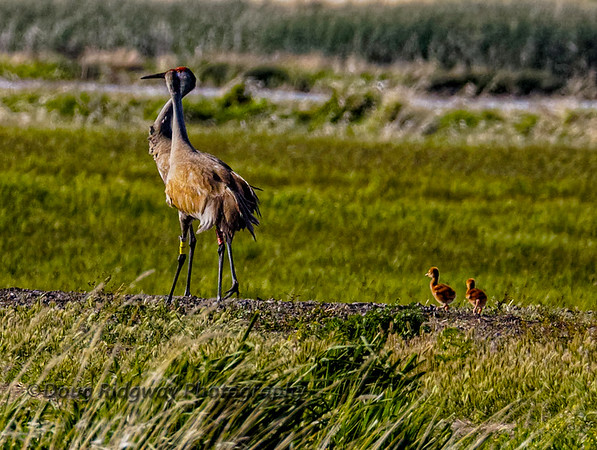 Mom, Dad and the Crane Colts