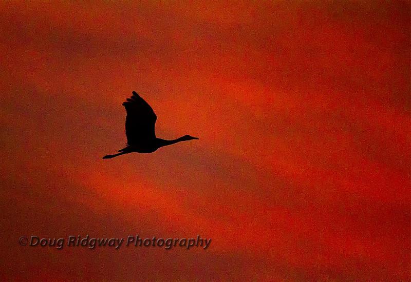 Lone Crane Silhouette