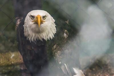 Fenced Freedom