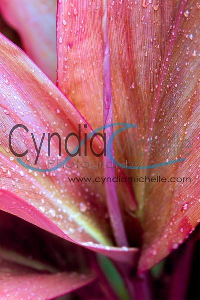 CyndiaLavik