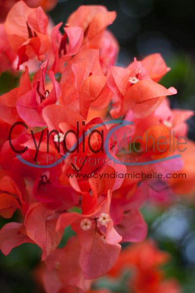 © Copyright Cyndia Lavik 2012