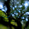 """Tree of Manoa"" - in Manoa Valley, Oahu"