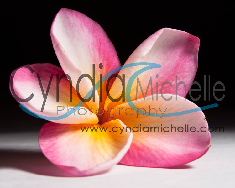 Plumerias in May, Thoughts