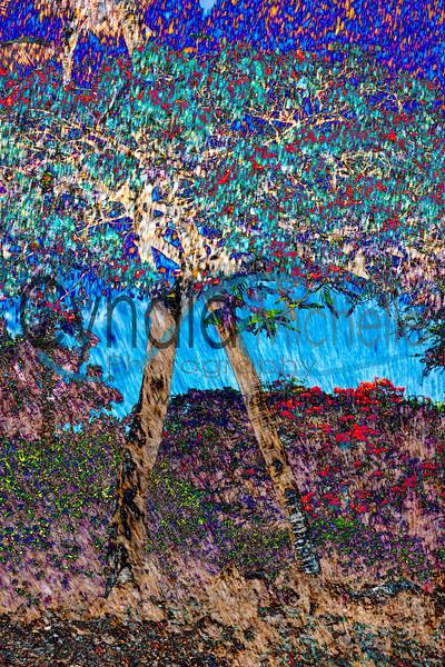Tree Fusion Waikoloa