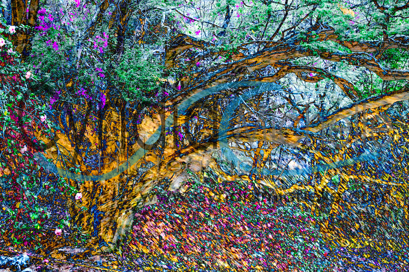 Tree Fusion Botanical Garden