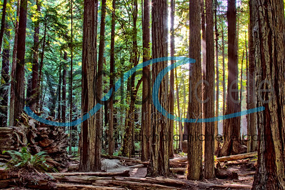 Avenue of the Giants, CA on July 9, 2014 - HDR