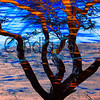 Tree to Hawi - 1 (Tree & Water Reflection)