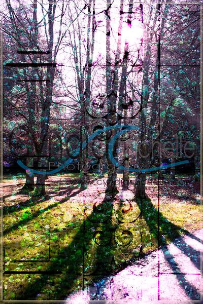 West Seattle Tree Montage - 1