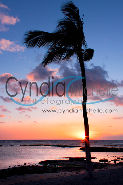 Palm Tree Sunset, Kailua-Kona