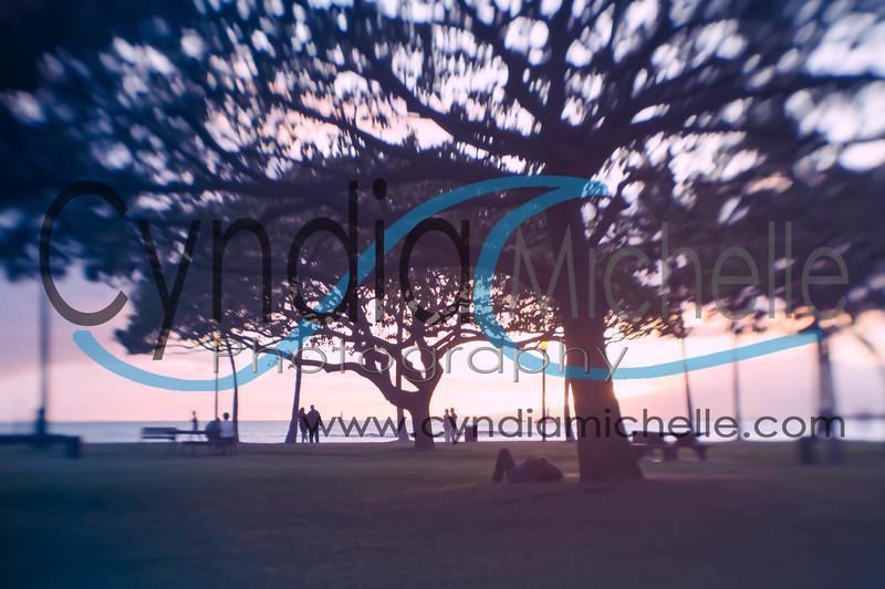 Trees, Sunset and Waikiki