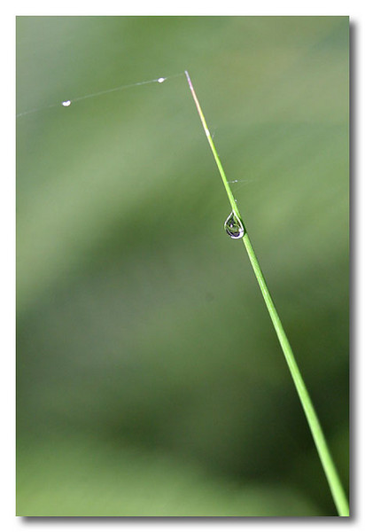 Morning dew. MacRitchie Reservoir.
