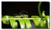 Spider on a leaf. Pulau Ubin.