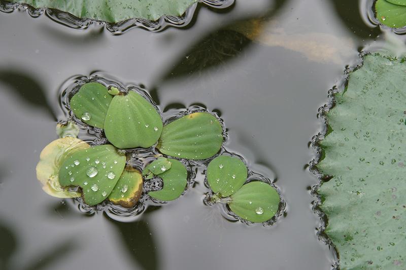 Water droplets.  Luang Prabang, Laos.