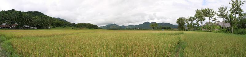 Pano shot of the sticky rice fields.  Luang Prabang, Laos.