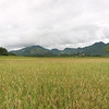 Pano shot of the sticky rice fields.  Luang Prabang, Laos.
