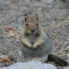 Chipmunk.  Lake Tahoe Emerald Bay.