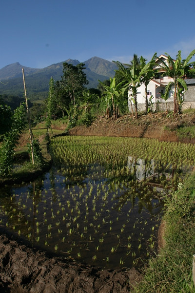 Back at Senaru village where we started our trek up Mount Rinjani. The mountain is in the background. Lombok, Indonesia.