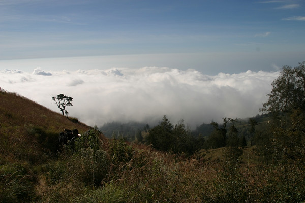 You take a breather, turn around and realised that you are above the clouds already!  Mount Rinjani, Lombok, Indonesia.