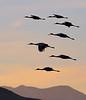 Sunset Sandhill Squadron