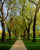 Narnia Entry in Spring