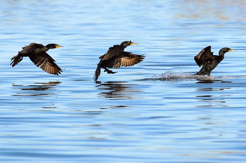 Cormorant Landing