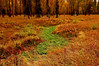 Green Streams in Fall Forests