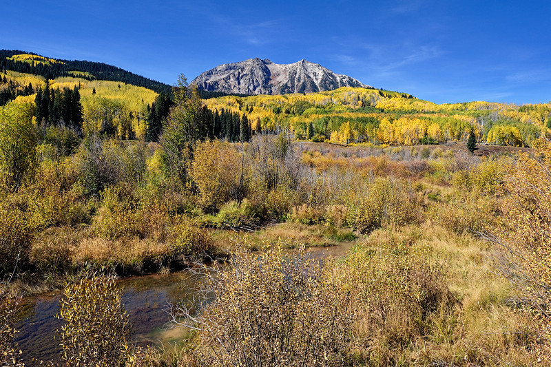 The Golden Waves of Kebler Pass