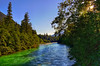 Finding the Pulse of a Salmon Running River: The Skagit at Newhalem