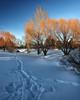 Christmas Blizzard of 2006 Park Path