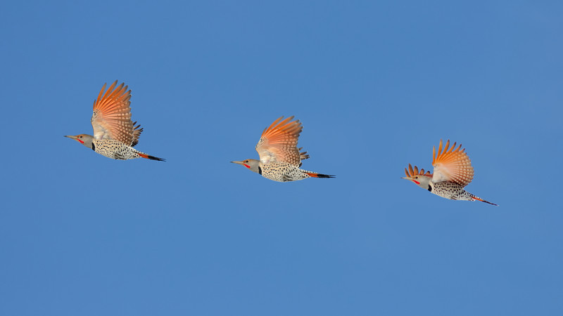 Flicker Flyby