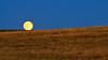 Harvest Moon On the Line