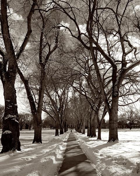 This Way to Narnia