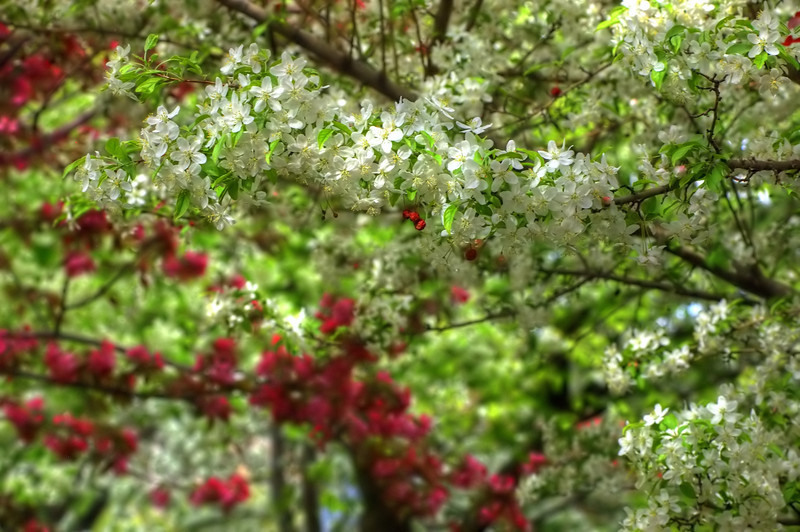 Crabapple Blooming Bokeh Kaleidoscope 3